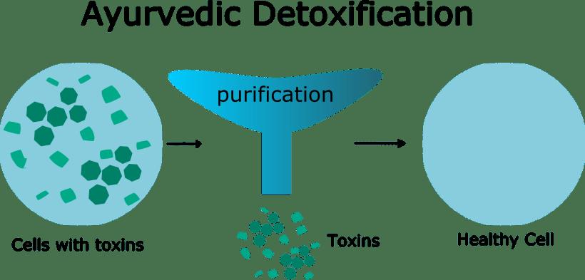 Ayurvedic Detoxification
