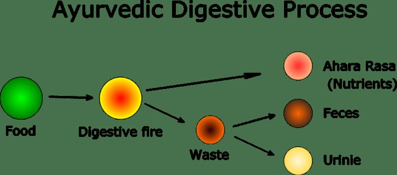 Ayurvedic Digestive Process