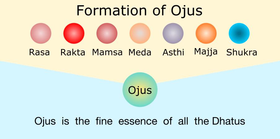 Formation of Ojus