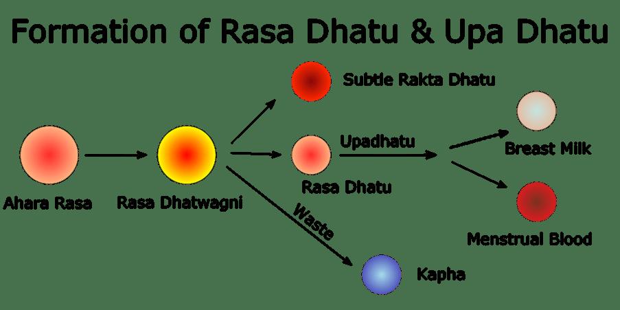 Formation of Rasa Dhatu & Upa Dhatu